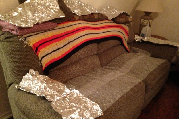 Exceptional Aluminum Foil And Bubble Wrap Can Keep A Dog Off The Furniture